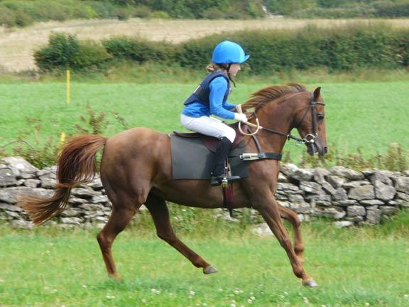 Pony-Racing