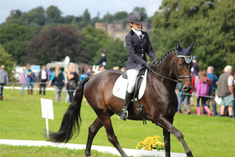 Bella Dressage Champs 2017