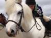 cute-pony-150x150